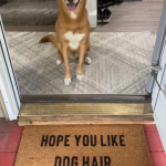 Hope-you-like-dog-hair-650x912